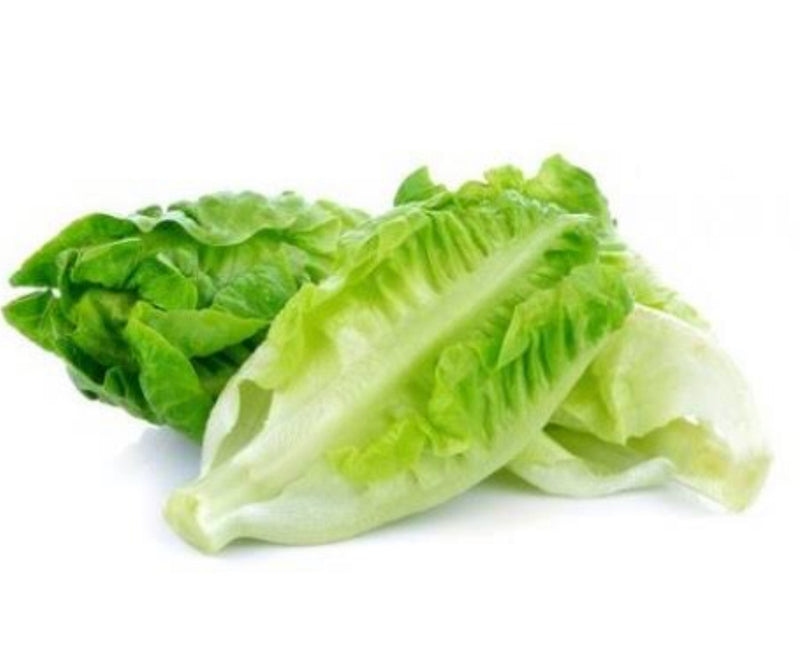 Lettuce Twin Cos Baby