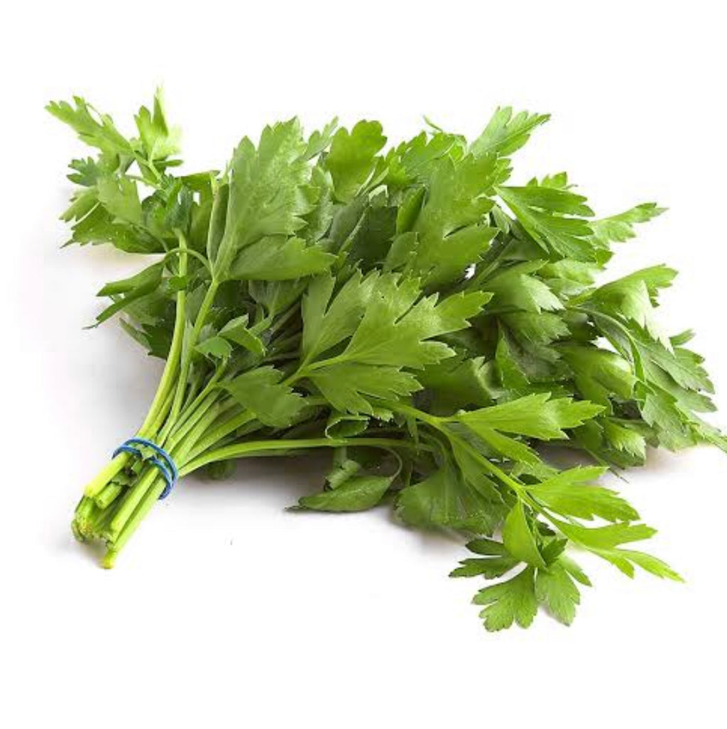 parsley Flat Leaf Bunch