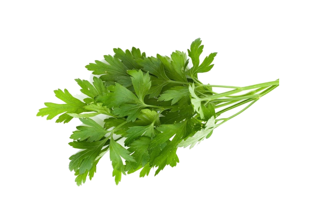 Parsley Continental bunch