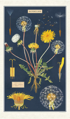 Cavallini Dandelion Cotton Tea Towel available from Indie Edinburgh
