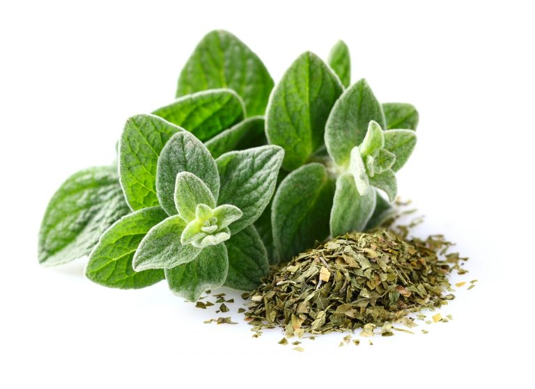 Oregano as a healing herb