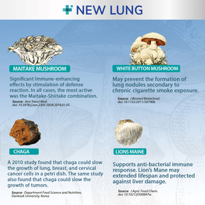 Success Chemistry mushroom supplement NEW LUNG® Mushroom Immune Aid - Lung Health & Immunity
