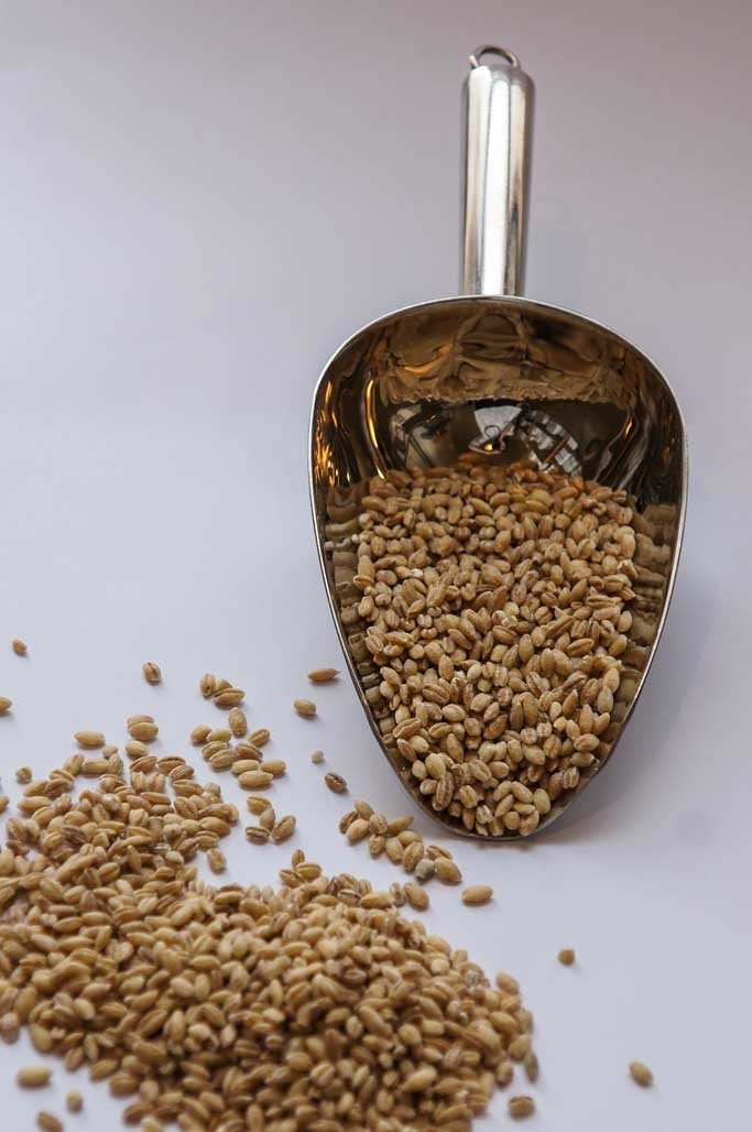 Pearl Barley Hulled-Grains-SproutTheGrocer