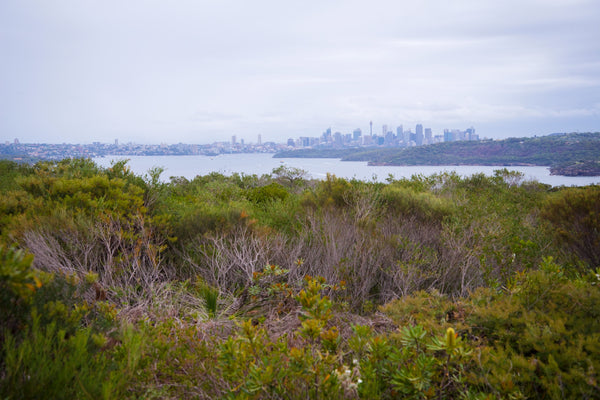 6-cheap-things-to-do-in-Sydney-travel-tips-manly north head city lookout fairfax