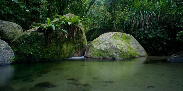Landscape Photo Fine Art Glass Print - Kuku Yalanji dreaming, Mossman Gorge Daintree Rainforest Queensland Australia