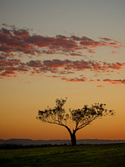 Sunset Sentinel, Hunter Valley Australia - Limited Edition Fine Art Print