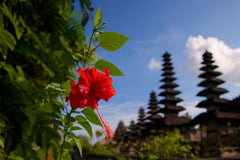 Temple's Flower, Pura Taman Ayun Bali - Art on Glass Open Edition