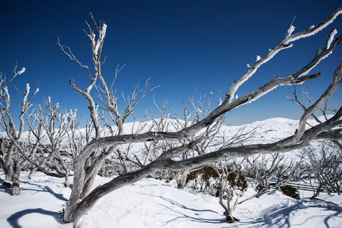 Frozen Limbs - Perisher Kosciuszko National Park NSW Australia Landscape Print