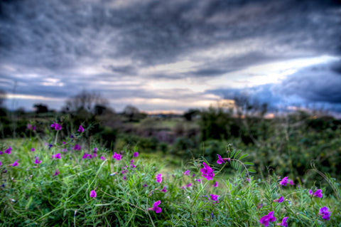 Wildflowers, Hunter Valley Australia - Limited Edition Fine Art Print
