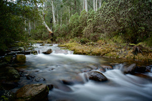 Print of the Week - Alpine Flow, Leatherbarrel Creek Koscuiszko National Park NSW Australia