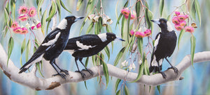 Magpie Melody | Magpies in flowering eucalyptus - Natalie Jane Parker