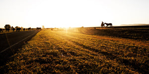 The Long Paddock - Spring Ridge Liverpool Plains NSW Australia Sunrise Landscape Print