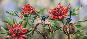 Waratah Picnic | Superb Fairy-wrens in Waratah - Natalie Jane Parker