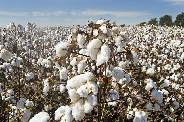 Three Ways in Which Cotton Harms the Environment