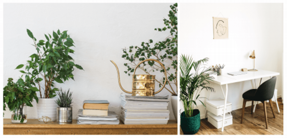 plants for home office
