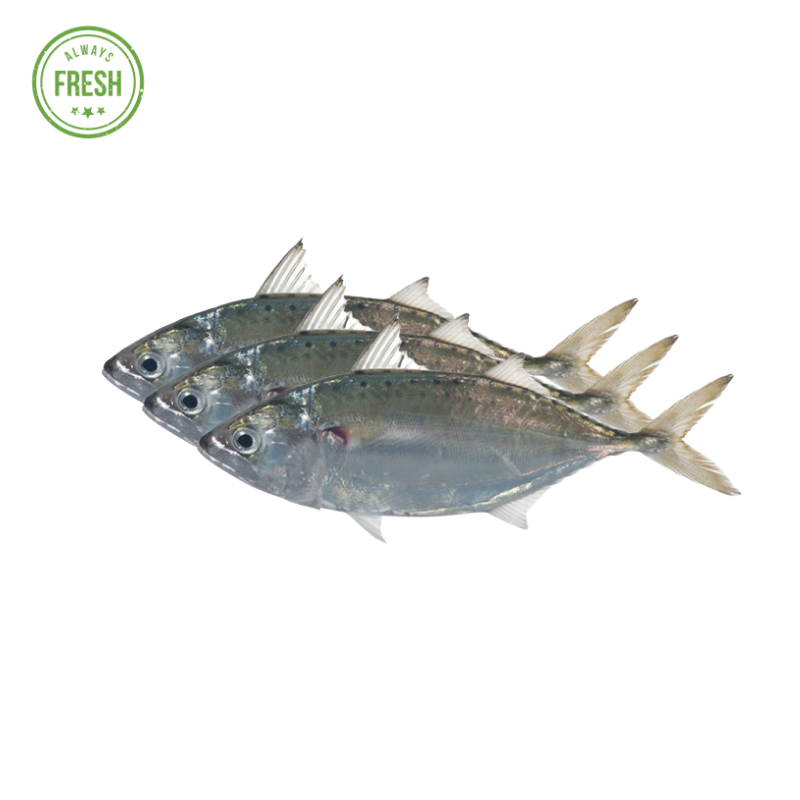 Fish Short Bodied Mackerel (Hasa Hasa)