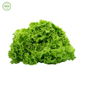 "Fresh Lettuce ""Green Ice"" (Litsugas)"