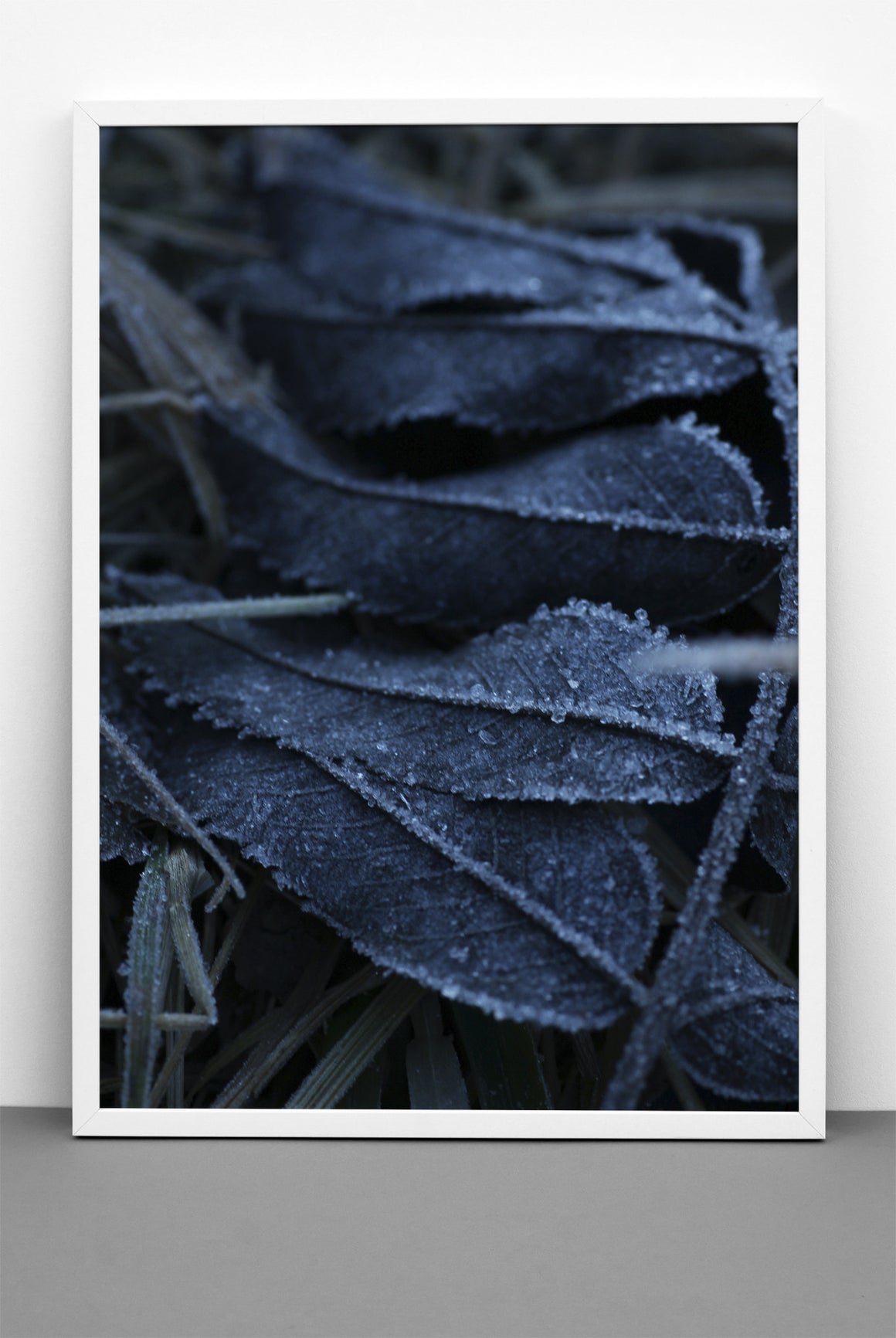 FROSTY BLUE LEAVES PRINT, PHOTOGRAPHIC POSTER