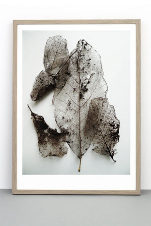 DELICATE LEAVES PRINT, PHOTOGRAPHIC BOTANICAL POSTER