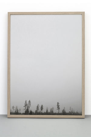 WHOLESALE FOREST PRINT, PHOTOGRAPHIC POSTER OF TREES