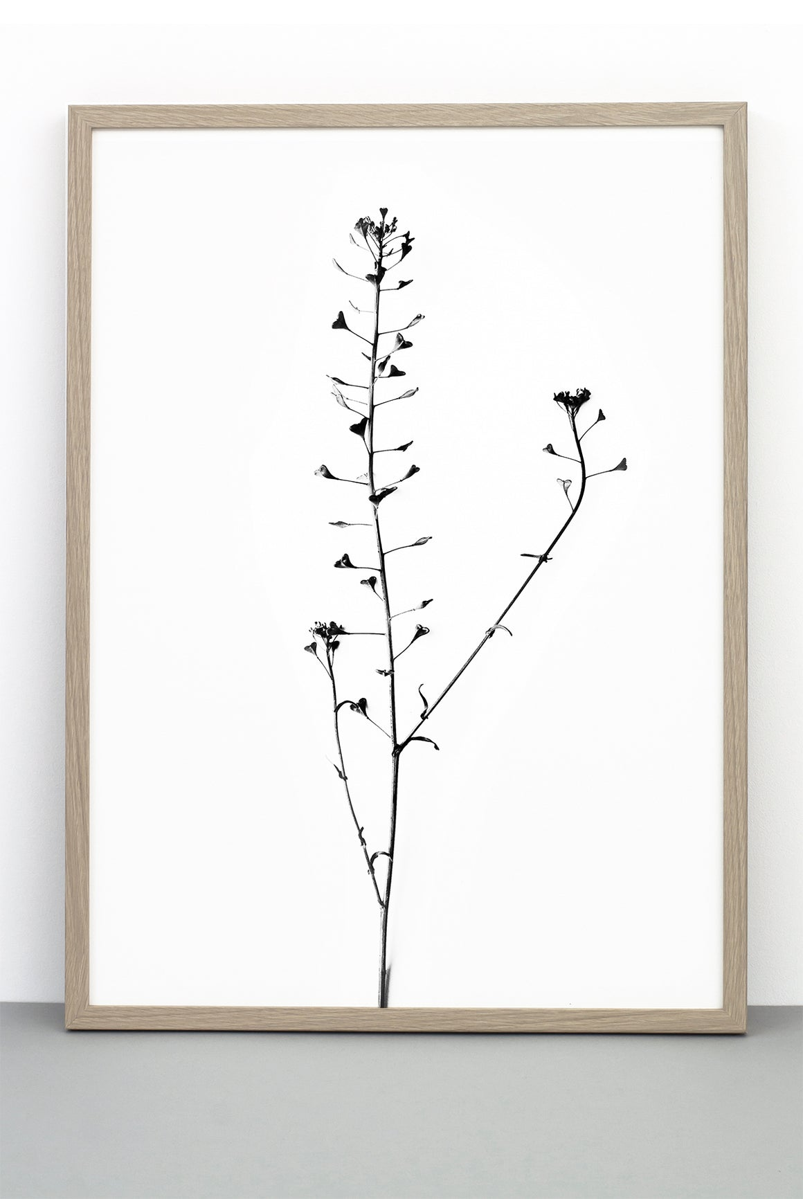 HEART PLANT PRINT, A BOTANICAL PHOTOGRAPHIC BLACK AND WHITE POSTER