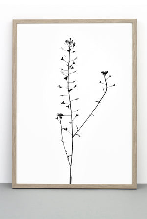 WHOLESALE HEART PLANT PRINT, A BOTANICAL PHOTOGRAPHIC BLACK AND WHITE POSTER