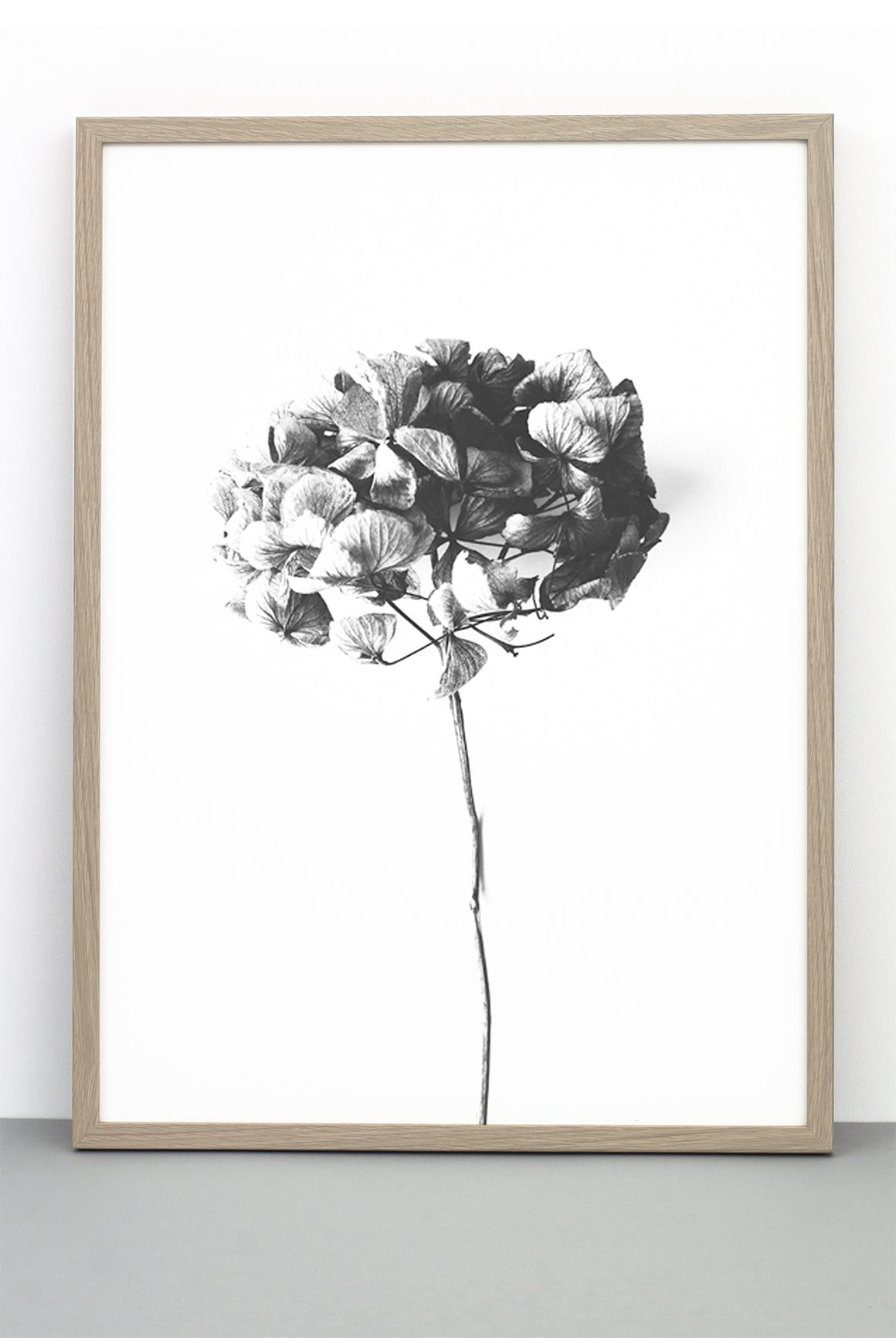 HONEY HONEY PRINT,  A BOTANICAL PHOTOGRAPHIC BLACK AND WHITE POSTER