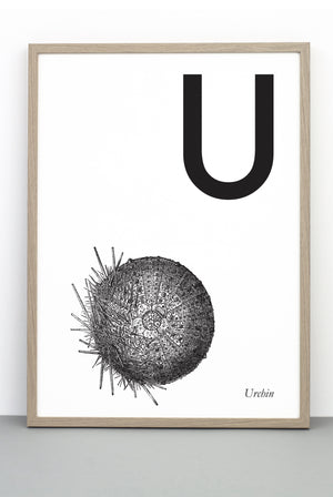 ANIMAL LETTER U, URCHIN, U DOWNLOADABLE PRINT