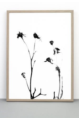 WHOLESALE ROSE HIP PRINT,  A BOTANICAL PHOTOGRAPHIC BLACK AND WHITE POSTER