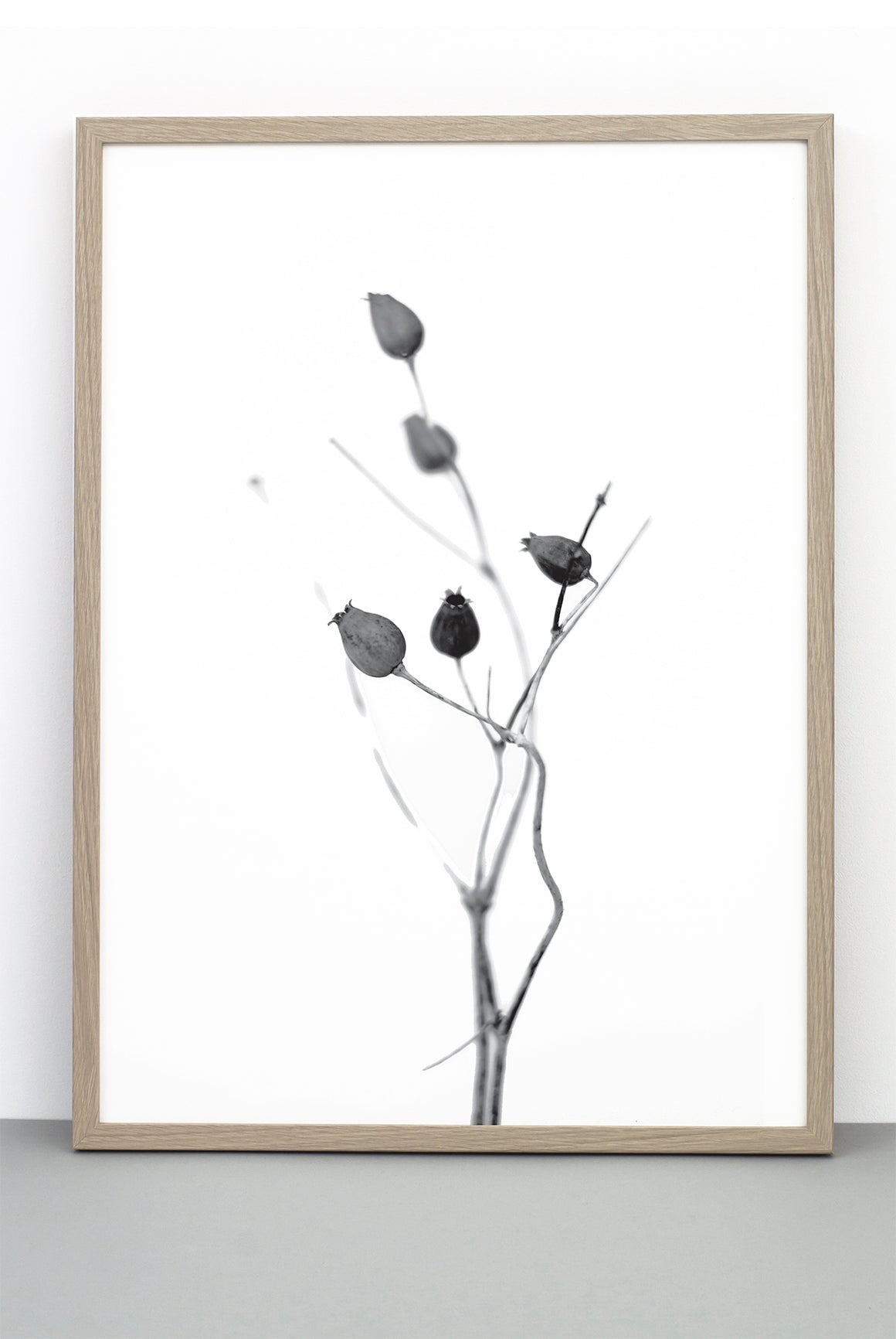 WHOLESALE SEED CAPSULE PRINT,  A BOTANICAL PHOTOGRAPHIC BLACK AND WHITE POSTER