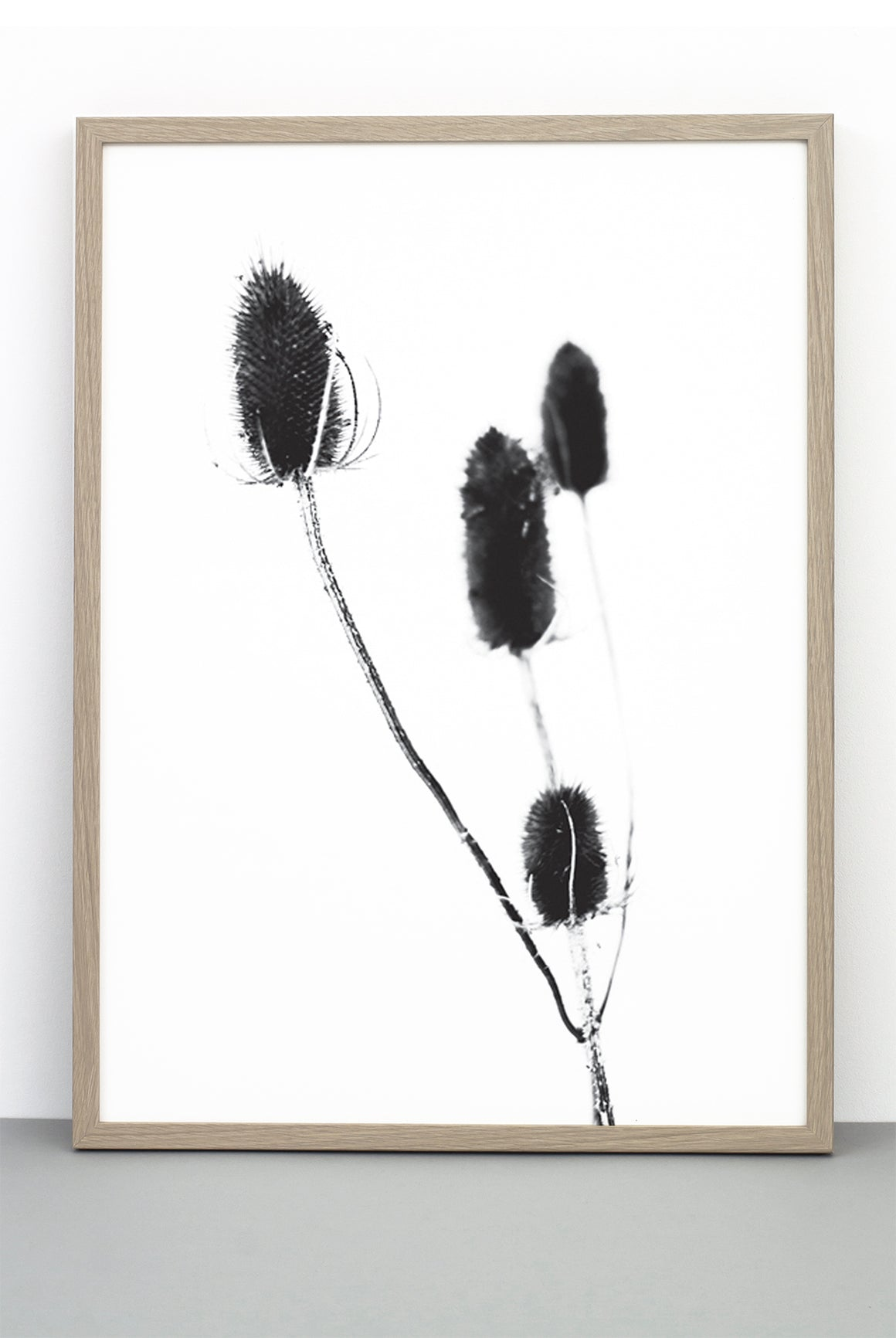 WHOLESALE THISTLE PRINT,  A BOTANICAL PHOTOGRAPHIC BLACK AND WHITE POSTER