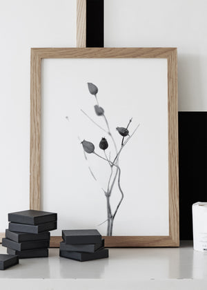 SEED CAPSULE PRINT,  A BOTANICAL PHOTOGRAPHIC BLACK AND WHITE POSTER