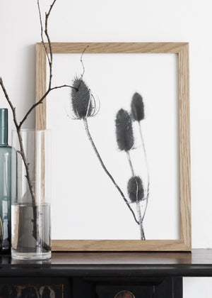 THISTLE PRINT,  A BOTANICAL PHOTOGRAPHIC BLACK AND WHITE POSTER