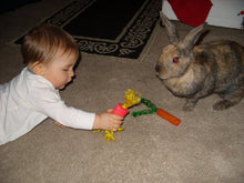 Load image into Gallery viewer, Carrot Rabbit Toy