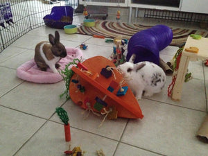 Crazy Carrot Rabbit Playground - HUGE