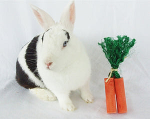 Carrot Rabbit Toy - 3 pk