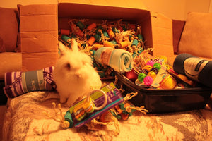 Rabbit Toy Donation to a Rabbit Rescue of Your Choice!