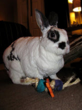 Load image into Gallery viewer, 3 pc Fling Rabbit Toy