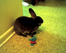Load image into Gallery viewer, Bunny Binky Rabbit Toy