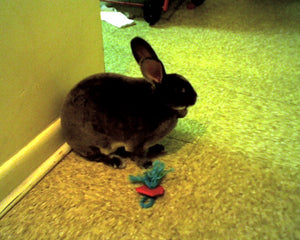 Bunny Binky Rabbit Toy