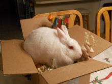 Load image into Gallery viewer, Rabbit Toy Donation to a Rabbit Rescue of Your Choice!