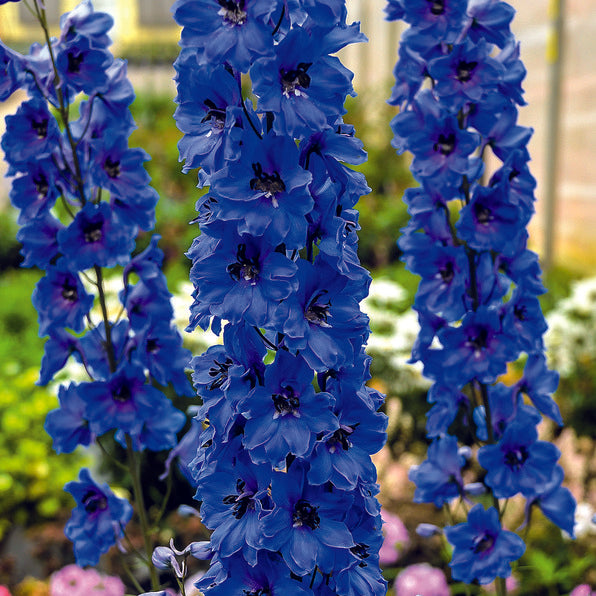 true blue flowers