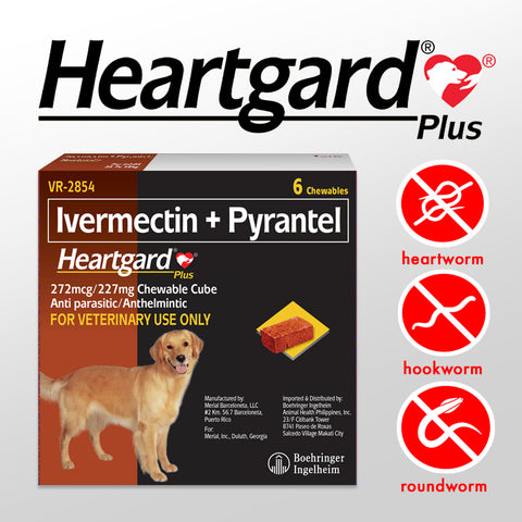 HEARTGARD PLUS for Dogs 23 to 43KG