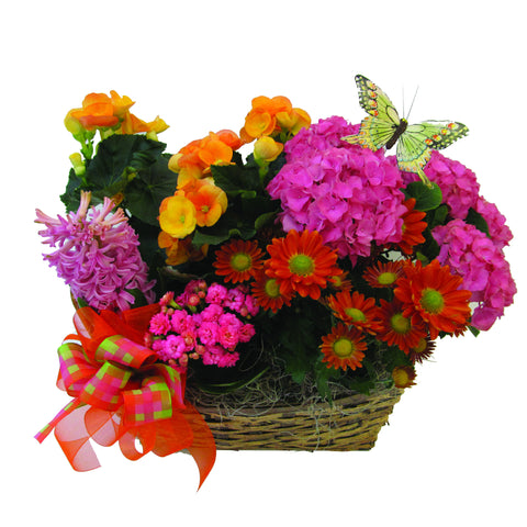 Bright & Bold Plant Assortment