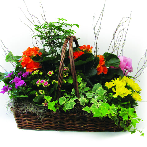 Impressive Flowering & Green Plant Assortment