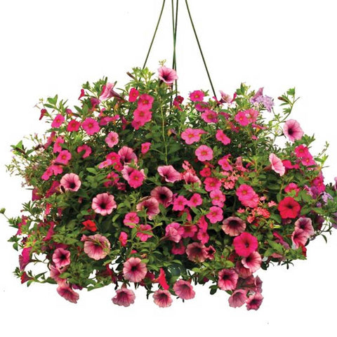 Large Assorted Flowering Hanging Basket