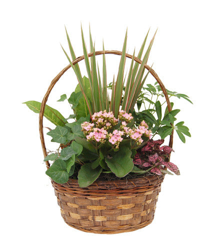 Basket of Green Plants (Choose Your Choice of Trim Color to Add)