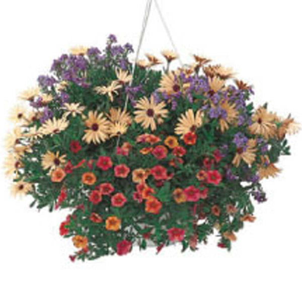 Summery Mixed Hanging Basket
