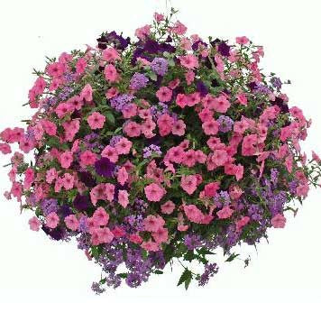 Mixed Feminine Hanging Basket