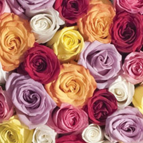 Dozen Longstem Mixed Color Roses